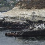 Seals basking on a rock a quick walk from the Pantaii Inn