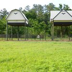 The two bat houses close to Lake Alice