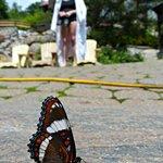 des papillons se gambadent autour de nous