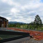 Vegetation on roof top