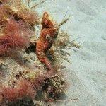 Seahorse at Champange Reef