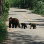 The town of Beulah is unfounded for Colorado and bears roam the road to the park.