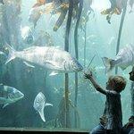 Waterfront Aquarium