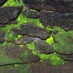 Bio-luminescent moss in the Fogu