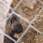 Loved the porcupine