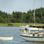 Wild Horses on Parrot Island
