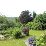 The mature garden