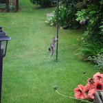 Squirrel back again for more  As seen through the glass