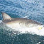 Shark Cage Diving Mosselbaai