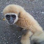 Monkeytemple