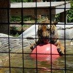Naples Zoo