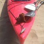 Ralph chilling on his kayak