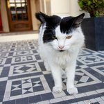 'Mr Watts' the hotel cat