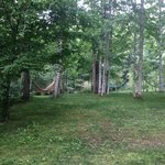 Hammocks among the birch trees and moss