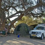 Camping spot nr 3 below a huge Camelthorn tree