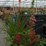 Great plants for sale ..