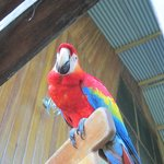 One of the macaws