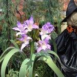 温室の中で咲く.珍しい欄の花