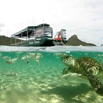 Green Turtle Tours Boat