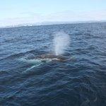 Close encounters with humpbacks!