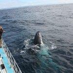 Mugged by a humpback!