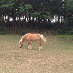 un cavallo bellissimo