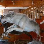 'Hunting Trophy' Wolf