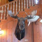 'Hunting Trophy' Moose