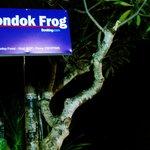 Pondok Frog Sign