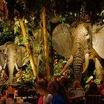 Rain Forest Cafe Elephants