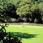 Blick auf Park mit Flüsschen