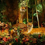 Rain Forest Cafe tigers.