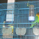Petits oiseaux du hall d'accueil