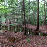Rhododendron State Park - View into the woods