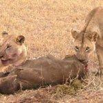 Safari beginning from Mombasa