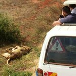 group-safari-from-mombasa