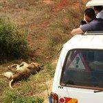 Group safari from Mombasa Kenya