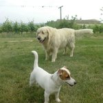 2 of the cutes dogs - Kiara and Dolphy