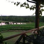 Photo de Enoch Stomp winery vineyard