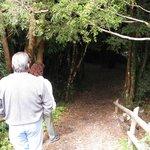 Entrando al bosque