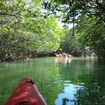 Paddling through the peaceful mangroves