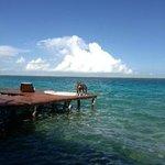 Bala desfrutando da lagoa no trapiche
