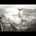 Shark flip