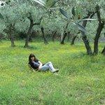 percorso degli ulivi