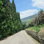 percorso tra gli ulivi in bici