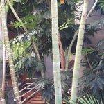 Jardin interior, extremadamente cuidado