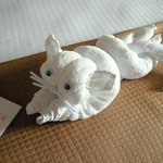 Towel cat and welcome card on bed!