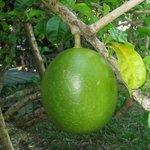 altri frutti strani