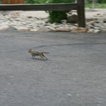 Little chipmunks everywhere- they will come inside your cabin if you leave your door open too lo