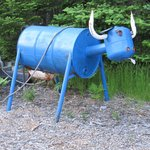 Blue the ox